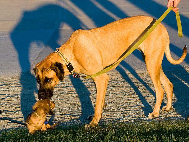 640px-Big_and_small_dog