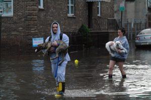 1024px walking dogs is hard in a flood 8143769476 1 300x200