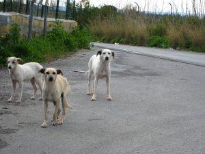 1280px street dogs 300x225